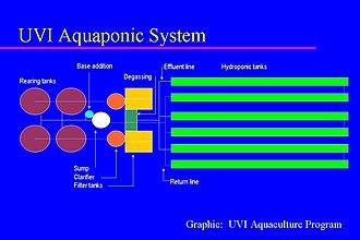 Aquaponics - Image: UVI Aquaponic System