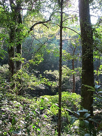 Udawattakele Forest Reserve - Image: Udawattakele Forest scene 2