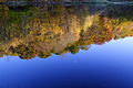 Upsidedown-trees-lake-reflection - West Virginia - ForestWander.jpg