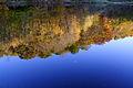 Upsidedown-trees-lake-reflection - West Virginia - ForestWander.jpg