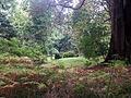 Upton Castle gardens - geograph.org.uk - 67380.jpg