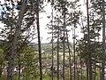 Varošica Medveđa 24.jpg