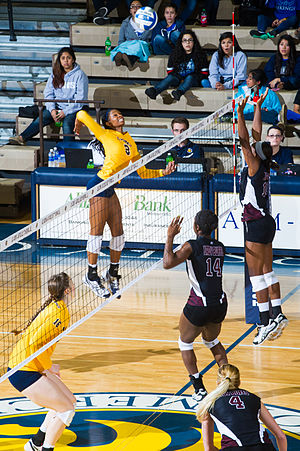 West Texas A&M Buffaloes - The Lady Buffs women's volleyball team in action against the Texas A&M–Commerce Lions in 2013