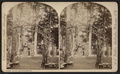 View in St. Paul's Grove, by Walker, L. E., 1826-1916.png