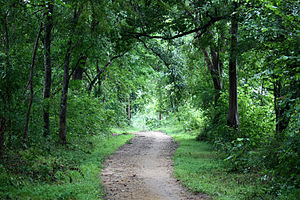 Forest road - Forest road created itself due to walkers' trail, Sri Lanka