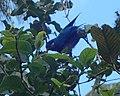 Vini Ultramarina - Ua Huka - Hane - Marquesas Islands.jpg