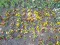 Virágágyások a Polgármesteri Hivatal előtt, 2018 Paks.jpg