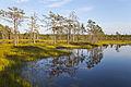 Viru Bog, Parque Nacional Lahemaa, Estonia, 2012-08-12, DD 57.JPG