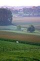 Vlaamse Ardennen 24.jpg