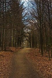 WaldwegEschweiler