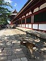 Wall surrounding Todaiji and deer.jpg