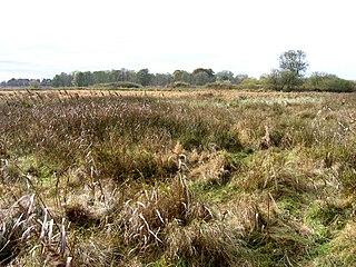 Wangford Warren and Carr Suffolk Wildlife Trust nature reserve