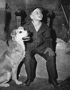 Sheree S Dog Rescue Long Beach Ca