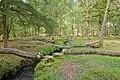 Warwickslade Cutting, felled trees - geograph.org.uk - 1438623.jpg