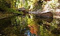 West Fork of Oak Creek, reflections.jpg