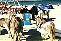Weymouth Beach Donkeys - geograph.org.uk - 910033.jpg