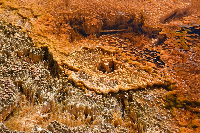 File:Where geology and biology thrive - Thermophile in Yellowstone National Park.jpg