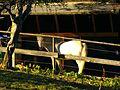 White Horse - panoramio (2).jpg