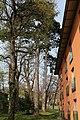 Wien- Penzing - Naturdenkmal 198 - 2 Schwarzkiefern (Pinus nigra) beim Europahaus.jpg