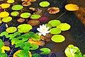 Wikipedia 13. Fotoworkshop Botanischer Garten Erlangen 2013 by-RaBoe 063.jpg