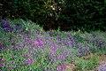 Wild Flowers (3736476756).jpg