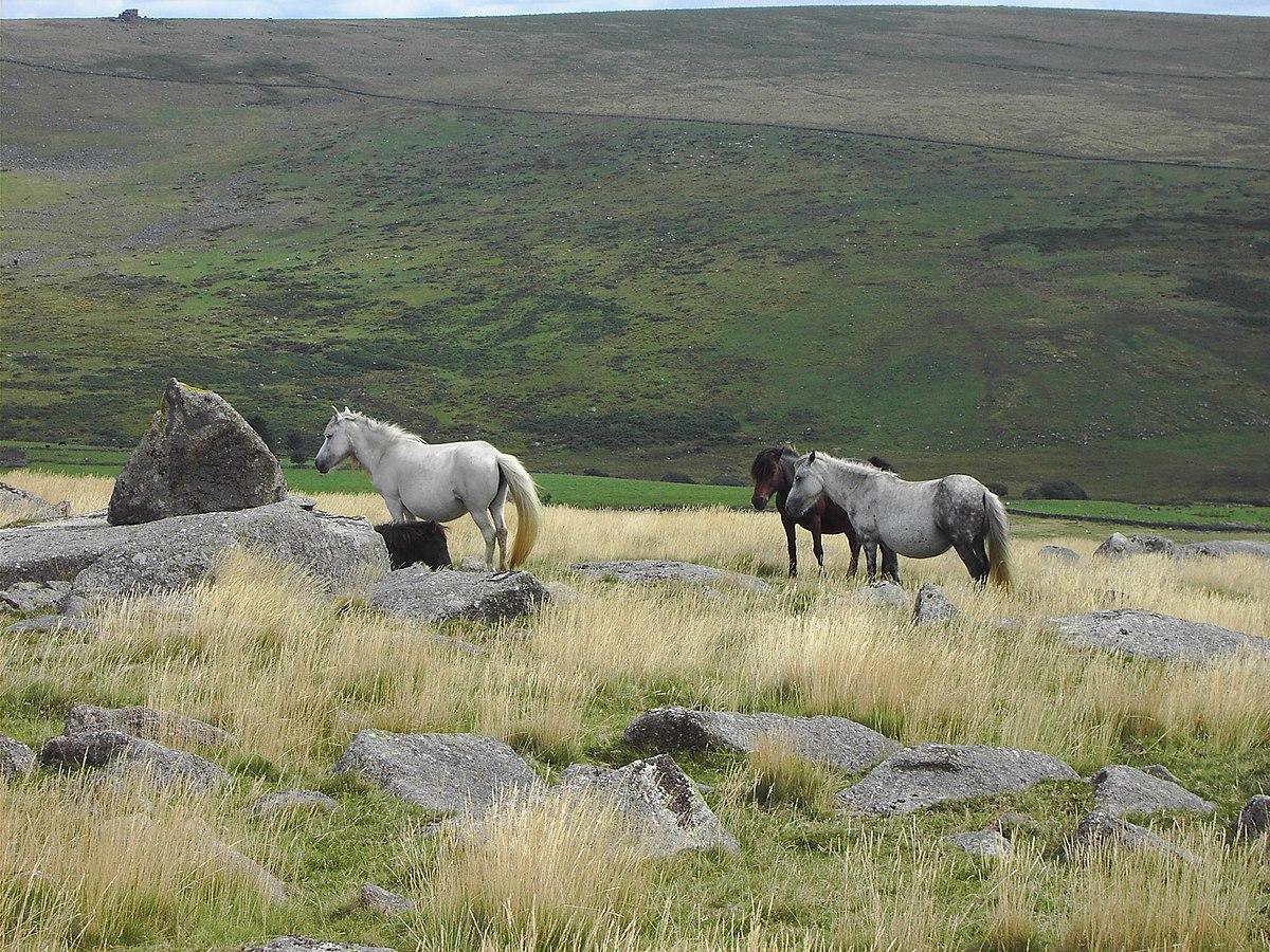 Dartmoor pony Wikipedia