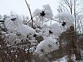 Winterflower1101 - panoramio - Gberstel.jpg