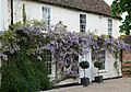 Wisteria along the house - geograph.org.uk - 1325013.jpg