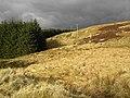 Woodland Edge - geograph.org.uk - 727936.jpg