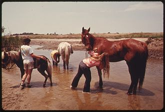 Upper Newport Bay - Youngsters wash their horses in Upper Newport Bay, 1975.  Photo by Charles O'Rear.
