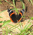 Yagur – Nesher, the Green Path – Mount Carmel 091-1.jpg