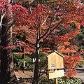 Yamanouchi, Kamakura, Kanagawa Prefecture 247-0062, Japan - panoramio (2).jpg