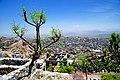 Yemen - panoramio.jpg