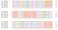 ZNF226 Ortholog Multiple Sequence Alignment 3.png