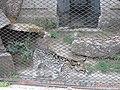 ZooBA12.jpg