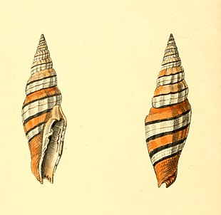 Zoological Illustrations Volume I Plate 23.jpg