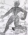 (Zodiac or Vein man) (4647709448).jpg
