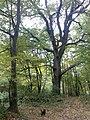 Őszi erdő - panoramio.jpg