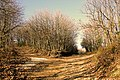 Μονοπάτι στις Καρυές Αγίου Όρους - panoramio.jpg