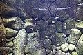 "Аквариум в павильоне ""Москвариум"", ВВЦ, Москва - panoramio (34).jpg"