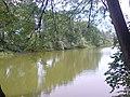 Большой пруд (пруд Савиной) вид 3.JPG