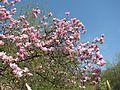 Ботанічний сад ім. М.Гришка IMG 9543.jpg