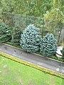 Деревья в парке Алатау (Алматы, Казахстан).jpg