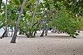 Доминиканская Республика - panoramio (9).jpg