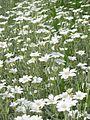 Донецкий ботанический сад 026.jpg