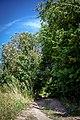 Дорога в ліс. Михайлівецьке заповідне урочище.jpg