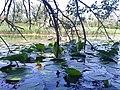 Затишний куточок озера Солоне.jpg
