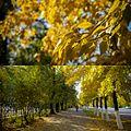 Золотая осень в Кызыле.jpg