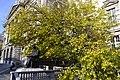 Испод белог дуда - Споменик Николи Тесли.jpg