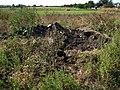 Курган у селі Червоні Поди, наслідки роботи шукачів золота.JPG